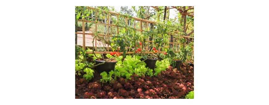 Companion Planting For Pest Control South Africa - Hydrax Hydro